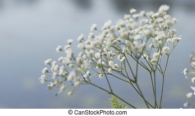 White wildflowers against the sky