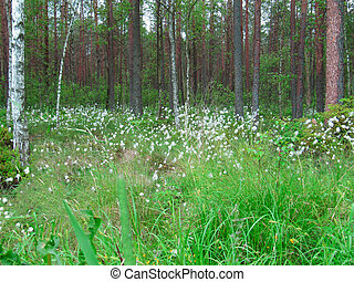 White wildflowers in the forest, natural background