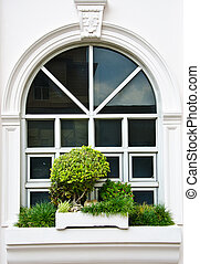White window with bush