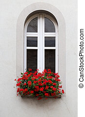 White window with vase of red flowers.
