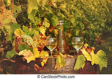 white wine and vineyard autumn season