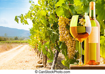 White wine and vineyard - Bottle and glass of white wine on...