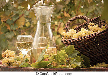 white wine vineyard autumn season
