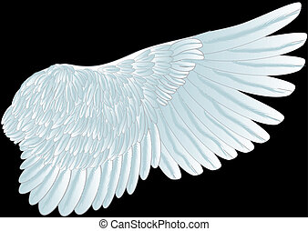white wing isolated on th black background