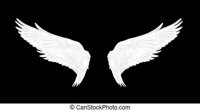 white wings of bird on black background