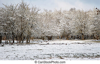 White winter in the park