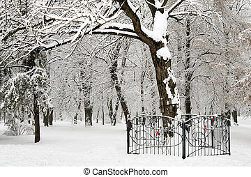 White winter trees in snow