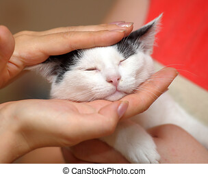 white with black kitten in hands
