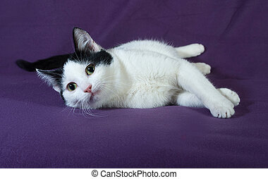 White with black spots kitten lying on lilac