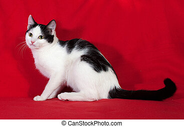 White with black spots kitten sitting on red
