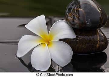 White with yellow plumeria flower on pebble rock