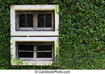 White wooden window with wall shrubs background