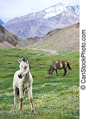 White young horse on green grass pasture