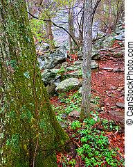 Whiteoak Canyon Trail Virginia