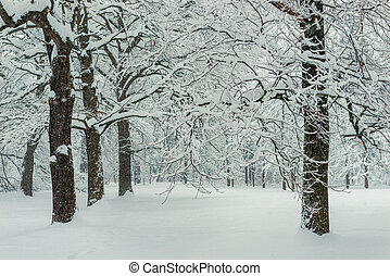 Whites of trees in the snow after a snowfall, winter landscape. Forest in winter
