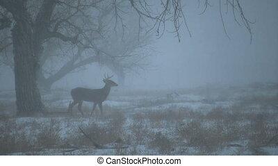 Whitetail Buck Under Tree in Snow