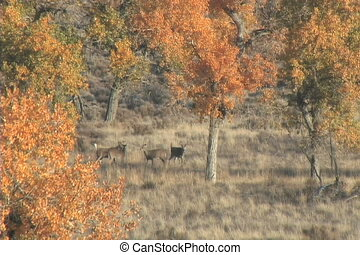 Whitetail Bucks - a group of whitetail bucks amongst the...