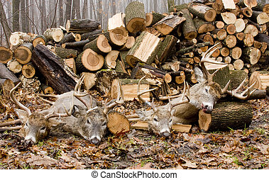 whitetail bucks harvested with a woodpile background
