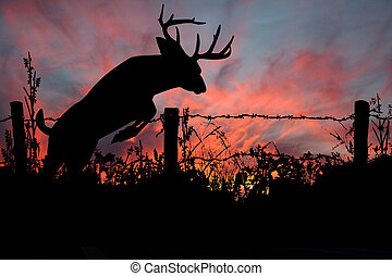 whitetail, dólar, deer's, pôr do sol, pulo
