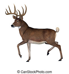 whitetail, dólar