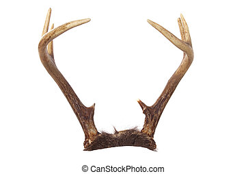 A set of whitetail deer antlers isolated on white that you can easily add to your favorite animal. Great for putting on pets or rabbits (jackalope)!