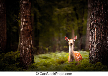 Whitetail Deer Buck standing in a woods.