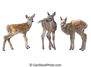 whitetail deer fawns watercolor