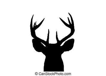 whitetail, mâle, cerf, silhouette
