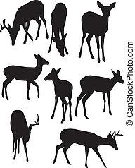 whitetail, silhouettes, cerf