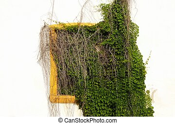 Whitewash Wall With Hidden Yellow Window In Green Vines.