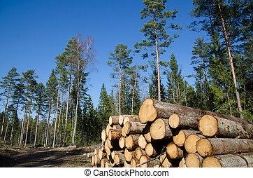 whitewood, pilha, madeira