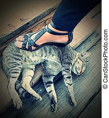 Who are stomp on me ? - Concept of Who are stomp on the cat...