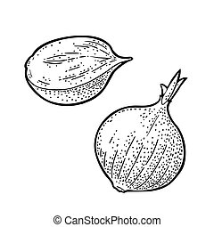 Whole and half onion. Vector black vintage engraved illustration isolated on white background