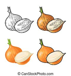 Whole and half onion. Vector vintage engraving and flat illustration