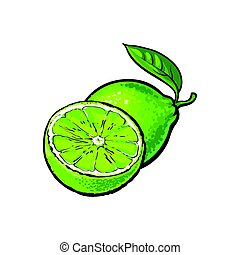 Whole and half unpeeled ripe lime, sketch vector illustration
