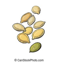 Whole and peeled pumpkin seeds, vector illustration isolated on white background. Drawing of pumpkin seeds on white background, delicious healthy vegan snack