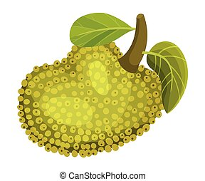 Whole and Ripe Egg-shaped Jackfruit with Green Seed Coat and...