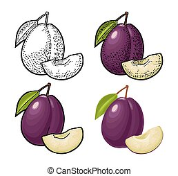 Whole and slice plum with seed and leaf. Vector vintage engraving