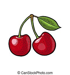 Whole cherry berry with leaf. Vector vintage engraving