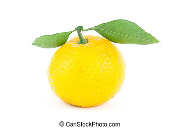 whole fresh mandarin orange with two symmetrical green leaves on a white background