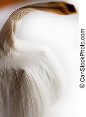 Whole garlic on white shallow focus