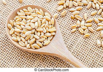 whole grain wheat kernel.