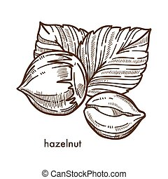 Whole healthy tasty ripe hazelnut with big leaves