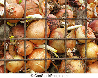 Whole onions in a crate