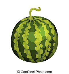 Whole round watermelon. Vector illustration on white background.