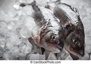 Whole Sea bass on ice