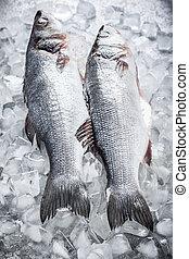 Sea bass on ice