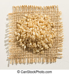 Whole Short Grain Rice Seed. Close up of grains over burlap.