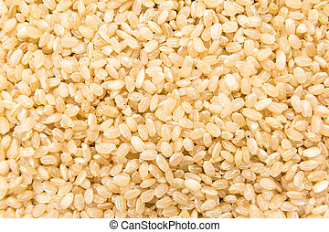 Whole Short Grain Rice Seed. Closeup of grains, background use.