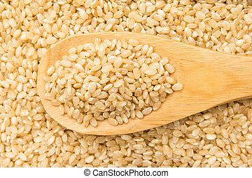 Whole Short Grain Rice Seed. Grains in wooden spoon. Close up.